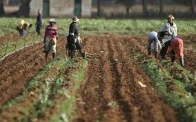 Communal Land and the Traditional Elites